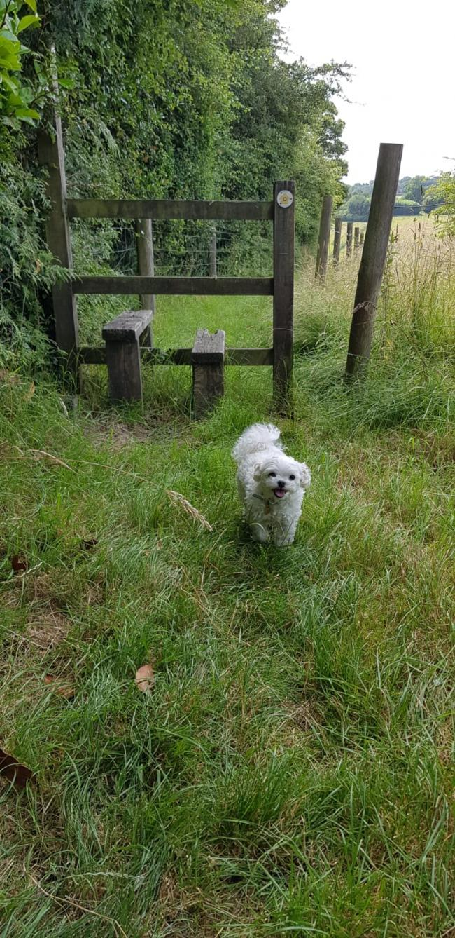 Jingu, from High Wycombe, loves walking in the Chiltern hills!