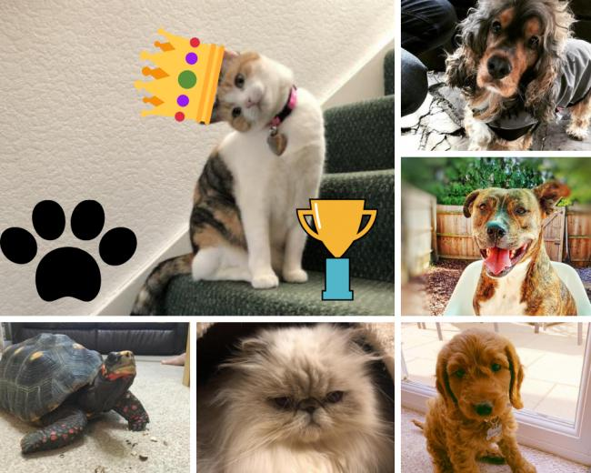 Adorable! Some of our favourite entries for Wycombe's Cutest Pet