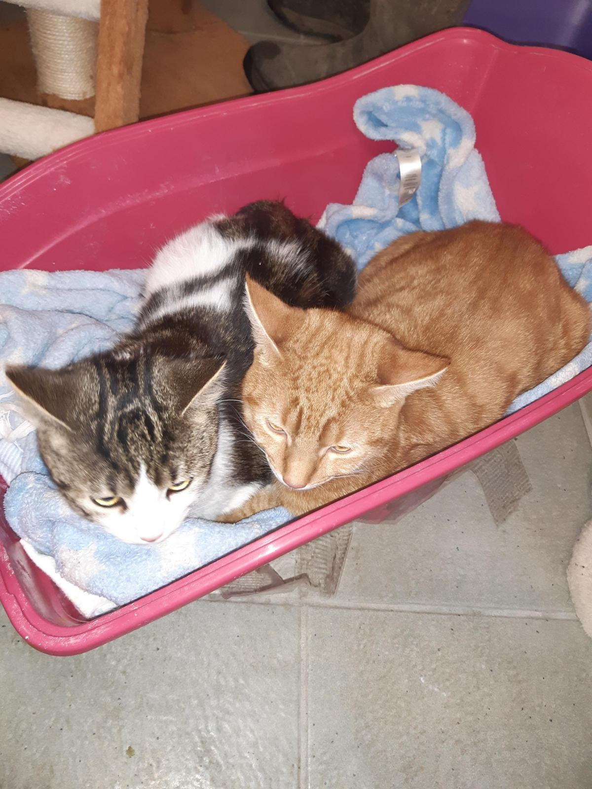 Two Kittens Found Dumped In Litter Tray At Side Of Busy Road