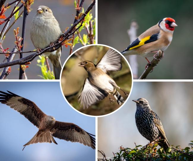 The Big Garden Birdwatch results in Bucks - illustrated by the BFP Camera Club