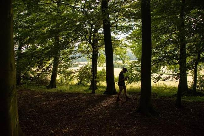 Jones Hill Wood That Inspired Roald Dahl To Write Fantastic Mr Fox To Be Destroyed Bucks Free Press