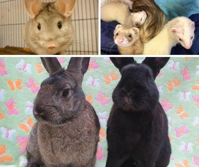 Clockwise from left: Herb, ferrets Dorothy, Pippin and Banjo, and rabbits Buxton and Ludlow