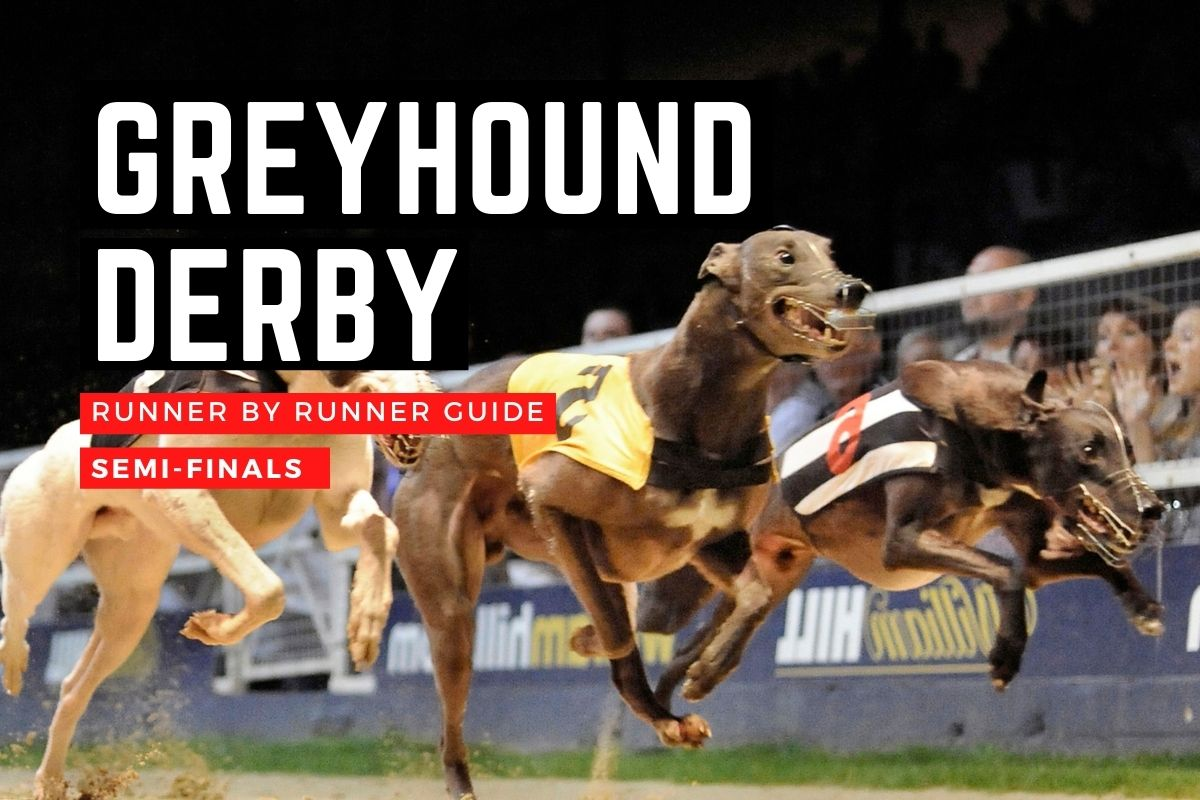 English Greyhound Derby 2020: Runner-by-runner guide to the semi ...