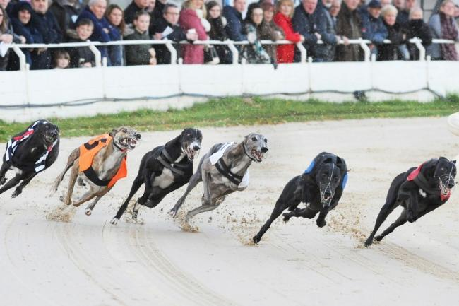 Greyhound racing - Friday is an Open Race at Romford