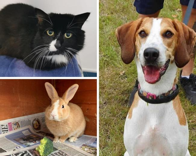 All images - RSPCA