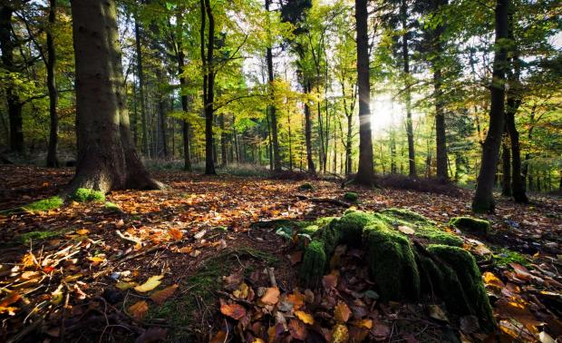 Bucks Free Press: Wendover Woods (Chiltern Society)