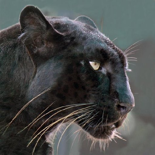 File picture: Is a panther or big cat living in the wild in Bucks?