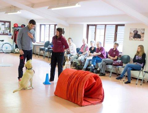 Mark Webber participating in a Hearing Dogs puppy class