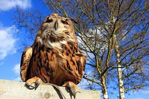 Owl rescue home gets the green light