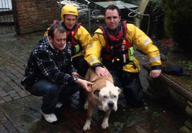Firefighters with the rescued dog and his owner