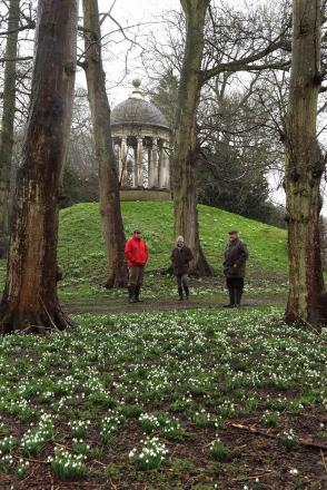 Churches to benefit from this weekend's Snowdrop Walk