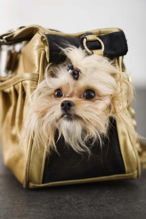 Top ten: Most common items found in a handbag