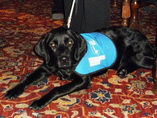 'Marlow' the puppy returns to visit fundraisers