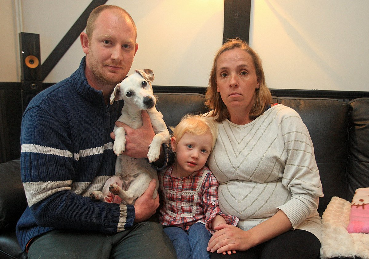 Family appeal to find driver after puppy badly hurt in crash