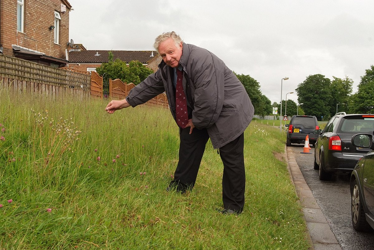 Heard the one about the grass verge? Cllr blasts cutting 'madness'