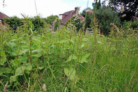 Cllr: 'Grass cutting will be different next year'