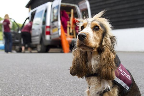 Crowdfunding campaign launched to buy puppy-mobile
