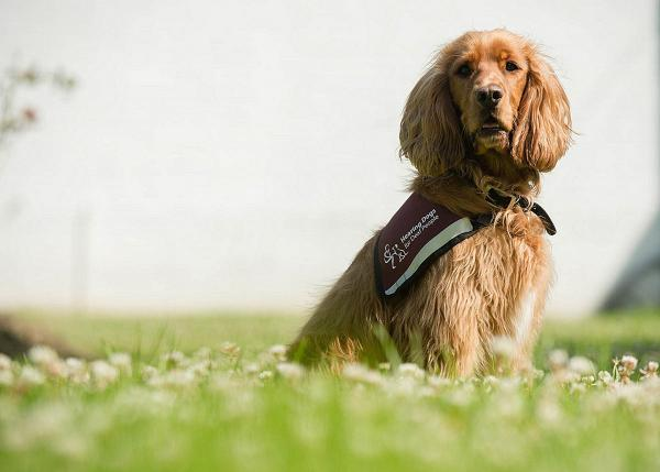 Hearing Dogs charity to hold late summer show