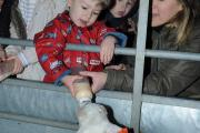 Pictures: children held feed hungry goats during half-term break