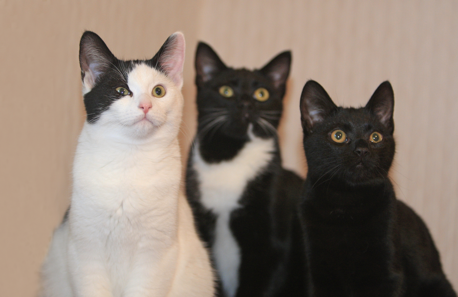 CAT OWNERS BEWARE: Food pouches withdrawn over vomiting fears (From Bucks Free Press)
