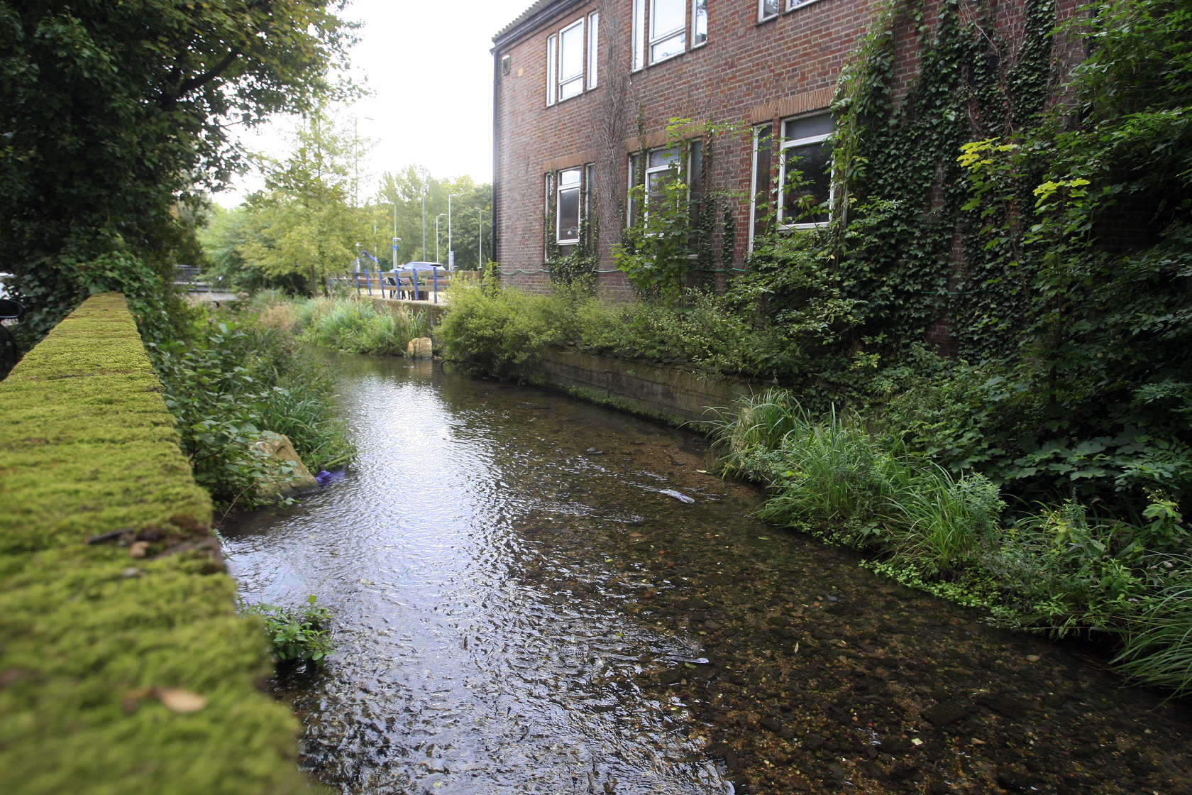 Reopening river could improve 'nuisance' area of town
