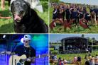 Thousands flock to first ever family, deaf and dog friendly music festival